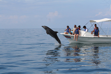 Dolphin in the Golfo Dulce
