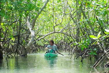 Kayaking In The Golfo Dulce